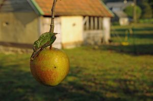 pomme-normandie